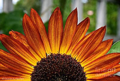 Sunrise Floral Poster