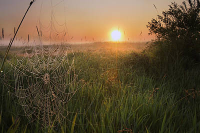 Sunrise On A Dew-covered Cattle Pasture Poster