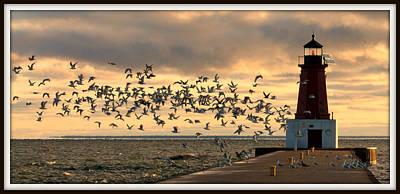 Sunrise Seagulls 219 Poster