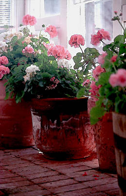 Sunroom With Geraniums Poster by Elaine Frink
