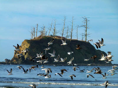 Sunset Bay Scape And Gulls Poster by Cindy Wright