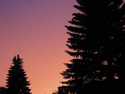 Poster featuring the photograph Sunset Between Two Evergreens by Brian Sereda