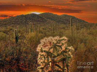 Sunset In The Desert Poster by Jim Wright
