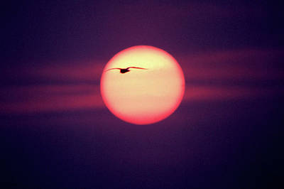 Sunset Poster by John Foxx