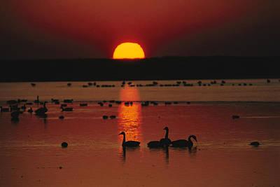 Sunset Over Chincoteague Island Marsh Poster