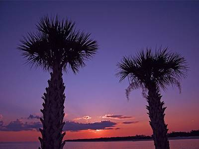 Poster featuring the photograph Sunset Through The Palms by Brian Wright