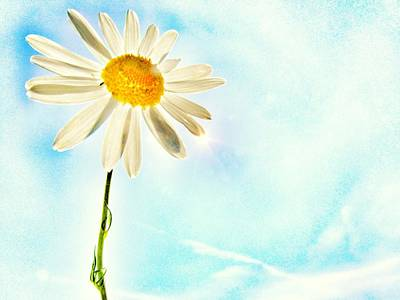 Sunshine Poster by Marianna Mills