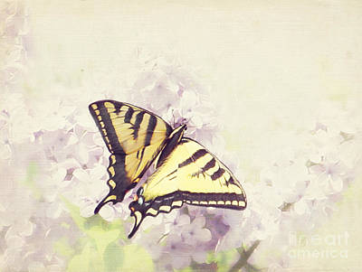Swallowtail On Lilac Poster
