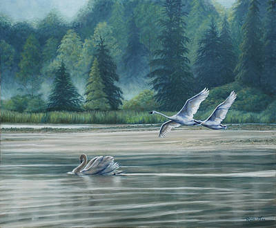 Swans On Carter Lake Poster by Ruth Gee