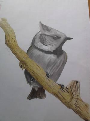 Swedis Birds Poster by Per-erik Sjogren