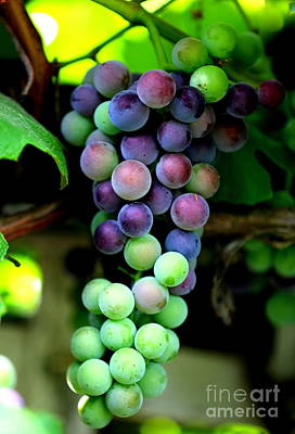 Sweet Grapes Poster by Carol Groenen