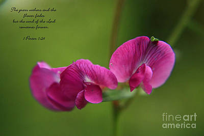 Sweet Pea Flower Poster