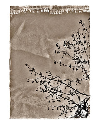 Poster featuring the photograph Sweetgum Sepia by Judi Bagwell