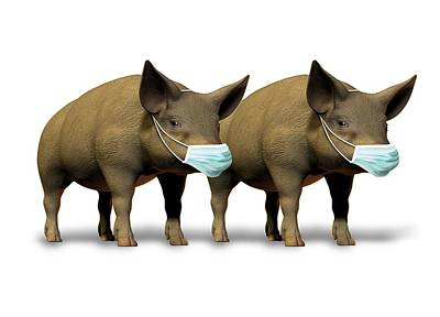 Swine Flu, Conceptual Image Poster by Victor Habbick Visions