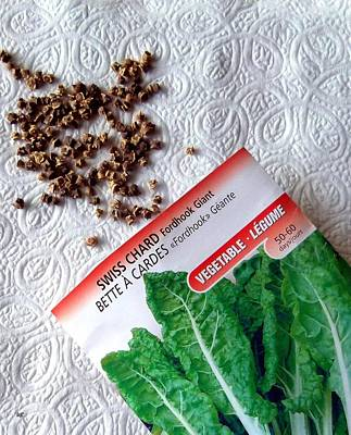 Swiss Chard Seeds Poster