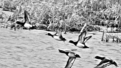 Poster featuring the photograph Take Flight No. 2 In Black And White by Janice Adomeit