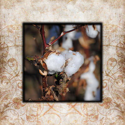 Tennessee Cotton I Photo Square Poster by Jai Johnson