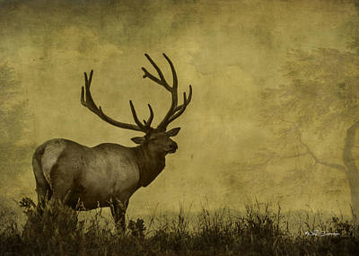 Textured Elk Poster by Jeff Swanson