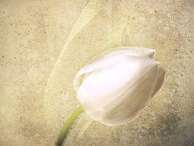 Textured Tulip Poster by Fiona Messenger
