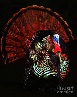 Thanksgiving Turkey - Painterly Poster
