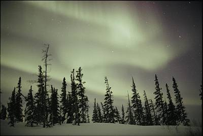 The Aurora Borealis Shimmers In The Sky Poster