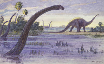 The Diplodocus Could Grow Poster by Charles R. Knight