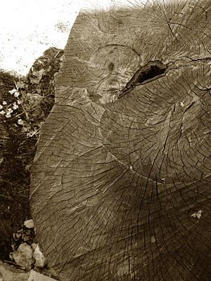 The Elephant Poster by Alessandro Della Pietra