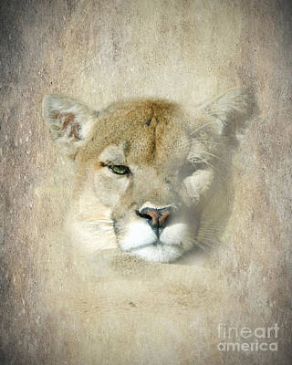 The Eye Of The Puma Poster by Betty LaRue