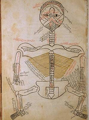 The Human Skeleton, From Mansurs Poster