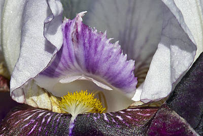 Poster featuring the photograph The Iris by David Lester