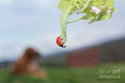 Poster featuring the photograph The Lady Bug No.1 by Laurinda Bowling