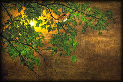 The Little Sparrow In The Tree Poster by Tom York Images