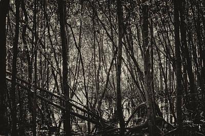 The Mangrove Poster by Armando Perez