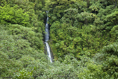 The Manoa Falls Waterfall In Honolulu Poster by Stacy Gold