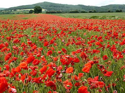 The Poppy Field Clonmel Poster