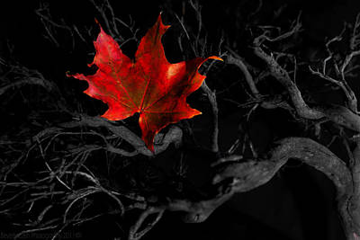 Poster featuring the photograph The Red Leaf by Beverly Cash