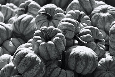 The Squash Harvest In Black And White Poster by Kathy Clark
