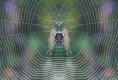 The Web Maker Poster by Mircea Costina Photography