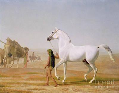 The Wellesley Grey Arabian Led Through The Desert Poster