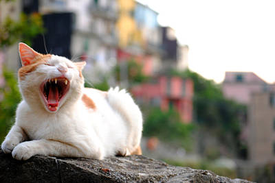The Yawning White Cat Poster by Neha Singh
