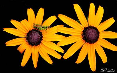 Poster featuring the photograph The Yellow Rudbeckia by Davandra Cribbie