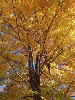 The Yellow Tree Poster by Angelika MacDonald