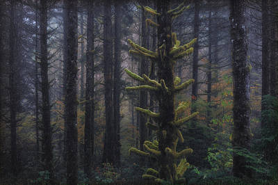 This Is British Columbia No.54 - Misty Mystical Moss Forest II Poster by Paul W Sharpe Aka Wizard of Wonders