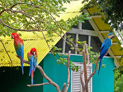 Poster featuring the photograph Three Parrots by Ann Murphy