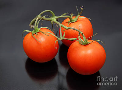 Three Red Tomatoes On The Vine Poster by Ricky Schneider