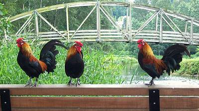 Three Roosters  Poster by Peter Mooyman