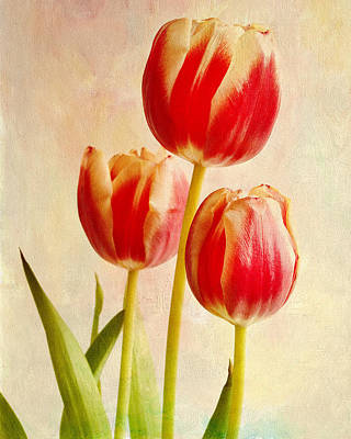 Three Tulips Poster by James Bethanis
