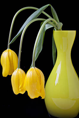 Three Yellow Tulips Poster