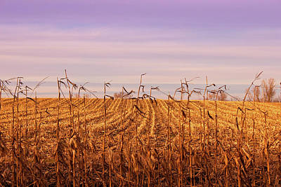 Poster featuring the photograph Through The Cornfield by Rachel Cohen