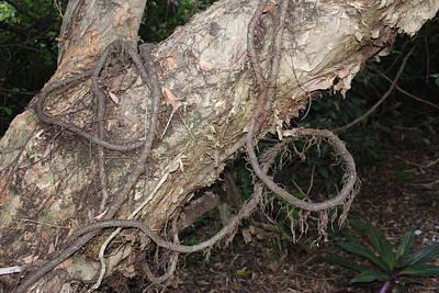 Tied Nature Poster by Lorenzo Muriedas